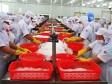 GÓP Ý DỰ THẢO BỘ LUẬT LAO ĐỘNG: Hãy để người lao động lựa chọn