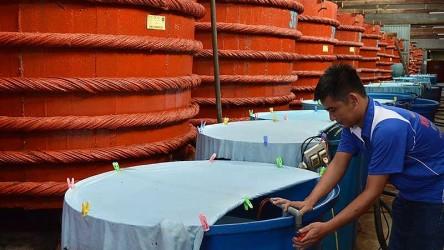 Dự thảo sản xuất nước mắm: