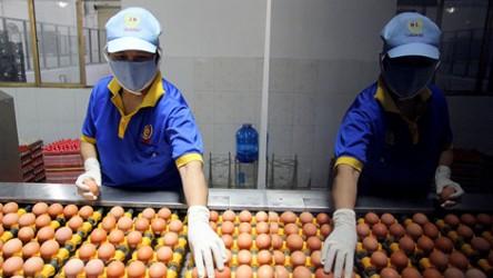 Quy trình chuỗi thực phẩm an toàn tại Công ty Ba Huân
