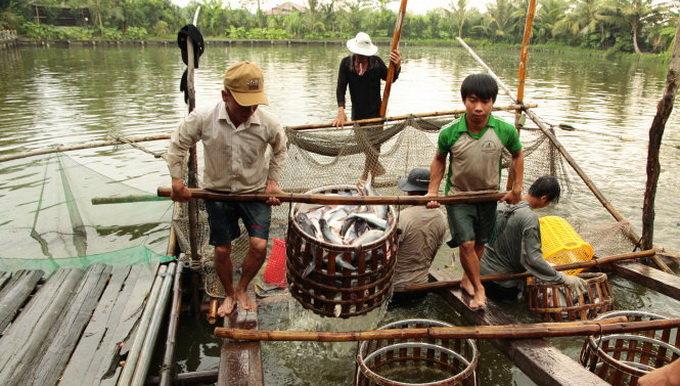 Tôm cá xuất khẩu gặp khó